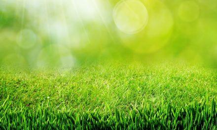 Mardi 14 Juin – Un entraînement au vert !
